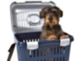 dog shipping.jpg