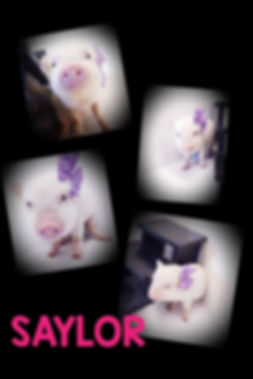 Collage+2020-01-17+13_47_08.jpg