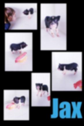 Collage 2019-06-29 15_57_40.jpg
