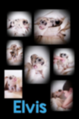 Collage+2020-02-23+15_35_57.jpg