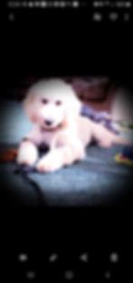 Screenshot_20190722-122409_Gallery_edited.jpg