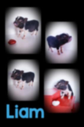 Collage+2020-02-22+18_40_51.jpg