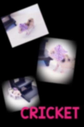 Collage+2020-01-17+14_18_55.jpg
