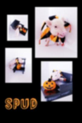 Collage+2019-10-23+23_33_39.jpg