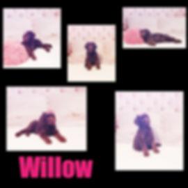Collage+2020-03-04+12_13_36.jpg