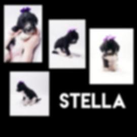 Collage+2020-03-30+11_30_32.jpg
