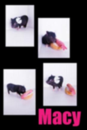 Collage 2019-06-29 15_40_11.jpg