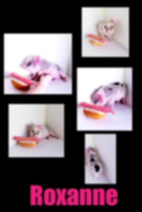 Collage 2019-06-29 17_52_33.jpg