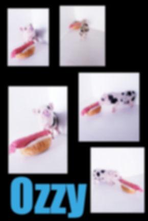 Collage 2019-06-29 15_59_15.jpg