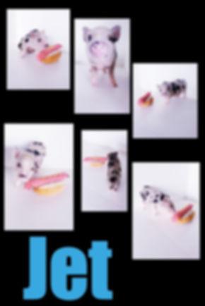 Collage 2019-06-29 00_52_13.jpg
