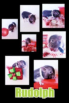 Collage+2019-12-04+13_42_05.jpg
