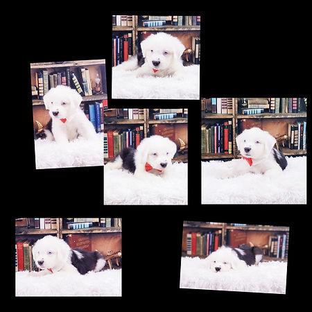 Collage+2021-04-15+13_27_24.jpg