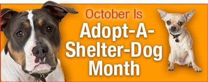adopt-dog-month.jpg