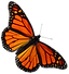 Monarch-butterfly.png