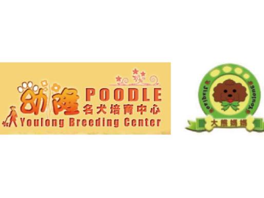 「幼隆名犬培育中心」視狗兒如至親、為貴賓犬奉獻其生的大熊媽媽
