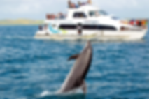 dolphin-cruise.png