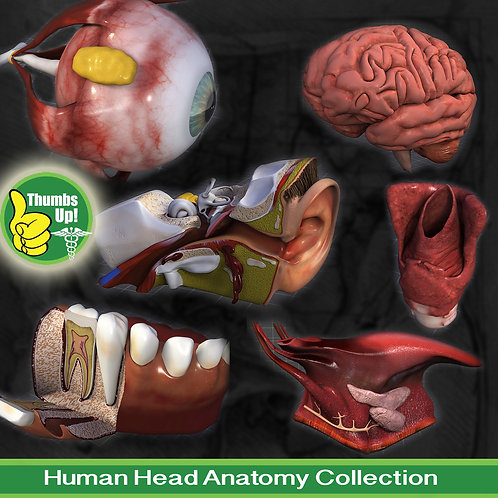 Human Head Anatomy Collection