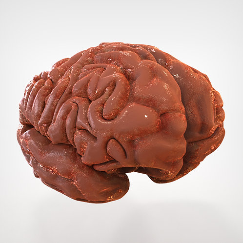 Human Brain two parts