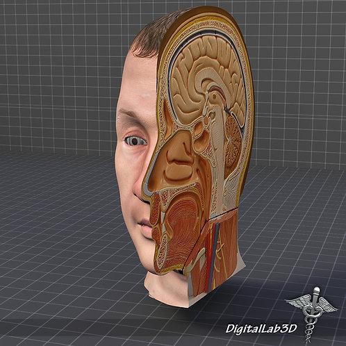 Head Cutaway
