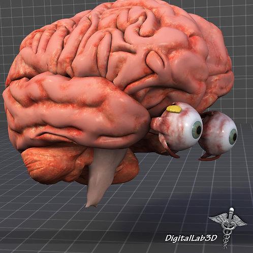 Human Eye and Brain