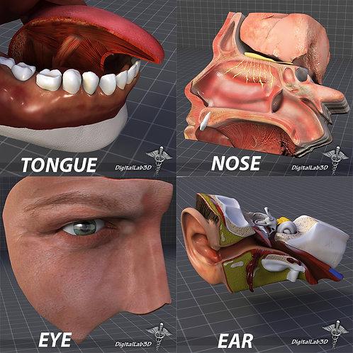 Human Four Senses