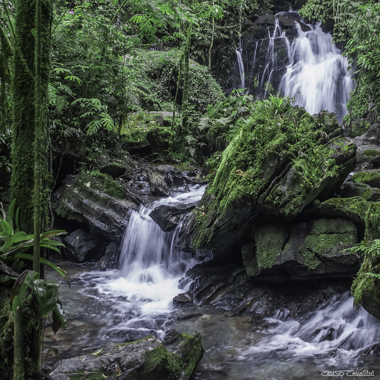 Jungle Waterfall Square