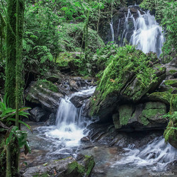 Jungle Waterfall Square