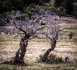 TREE HUG COMPACTADA ASSINADA