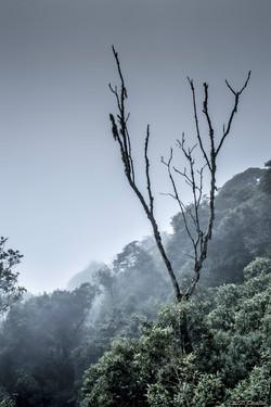 Mist Morning
