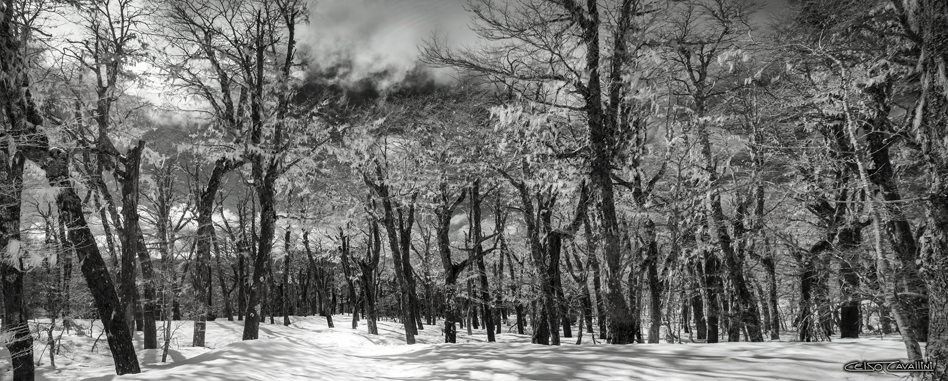SNOW FOREST INFRARED COMPACTADO ASSINADO