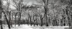 SNOW FOREST INFRARED COMPACTADO ASSINADO