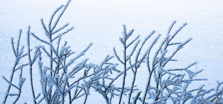 ICE BRANCHE HORIZONTAL COMPACTADA ASSINA