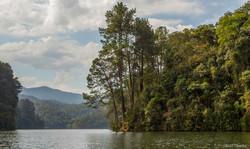 Lake and Tree