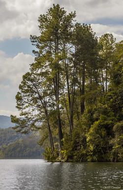 Lake ans Tree Vertical