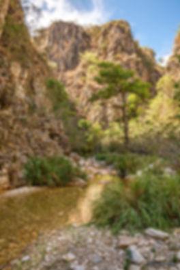 Galeria Cavallini Quadros Natureza paisagem Villa Lobos Shopping Landscape fine art fineart