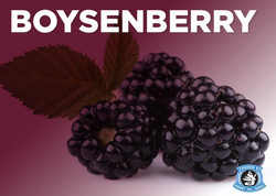 boysenberry.jpg