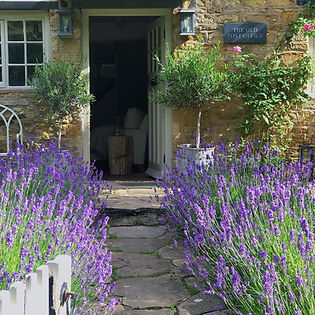 Cotswolds Cottage entry lavendar