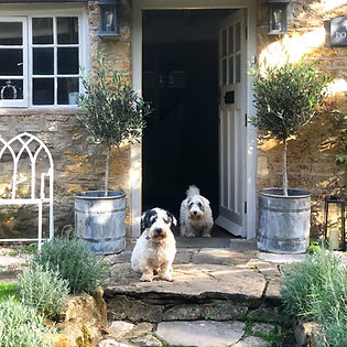 Cotswolds Cottage dogs front door plants