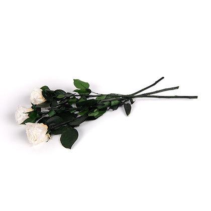 3 Roses Eternelles sur tige - Blanc Pur