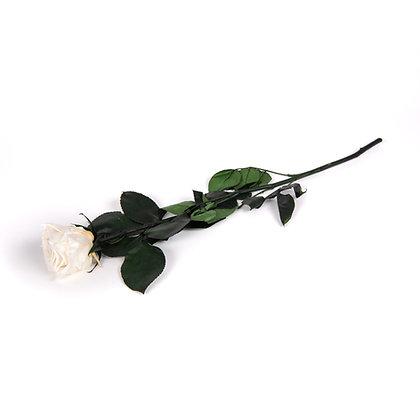 1 Rose Eternelle sur tige - Blanc Pur