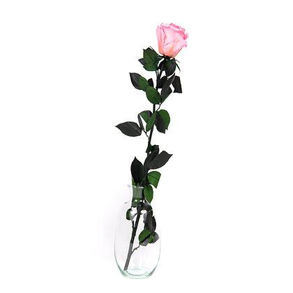 Vase verre 1 Rose Eternelle sur tige - Rose Tendre
