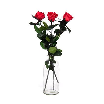3 Roses Eternelles sur tige - Rouge Passion