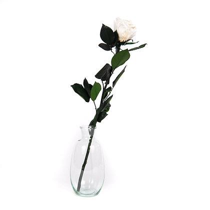 Vase verre 1 Rose Eternelle sur tige - Blanc Pur
