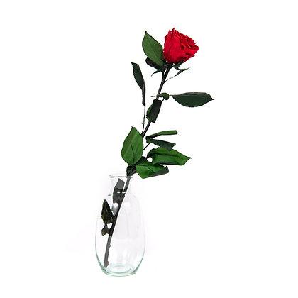 Vase verre 1 Rose Eternelle sur tige - Rouge Passion