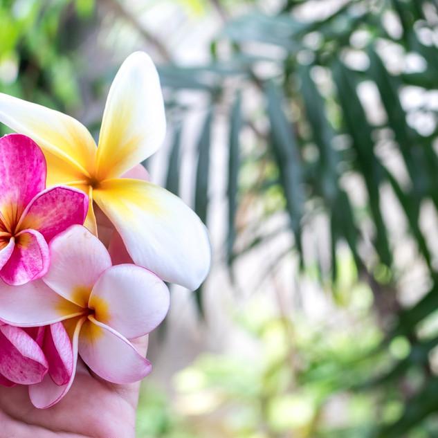 Hawaiiansk blomst