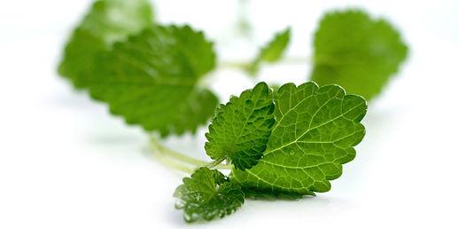Spearmint-Leaves.jpg