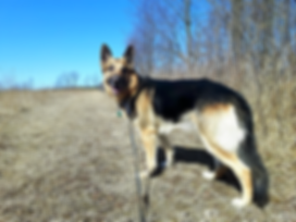 Doggy Daycare Orangeville