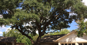3 Popular Myths about Tree Pruning You Should Never Believe