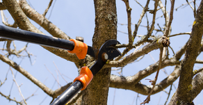 Tree Pruning: How Beneficial is it?