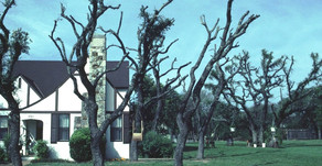 TEXAS OAK WILT: FREQUENTLY ASKED QUESTIONS